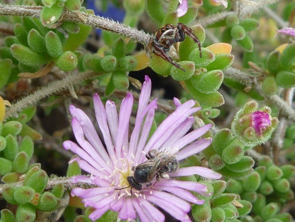 tiny wild spider Plants, Wild, Wildlife