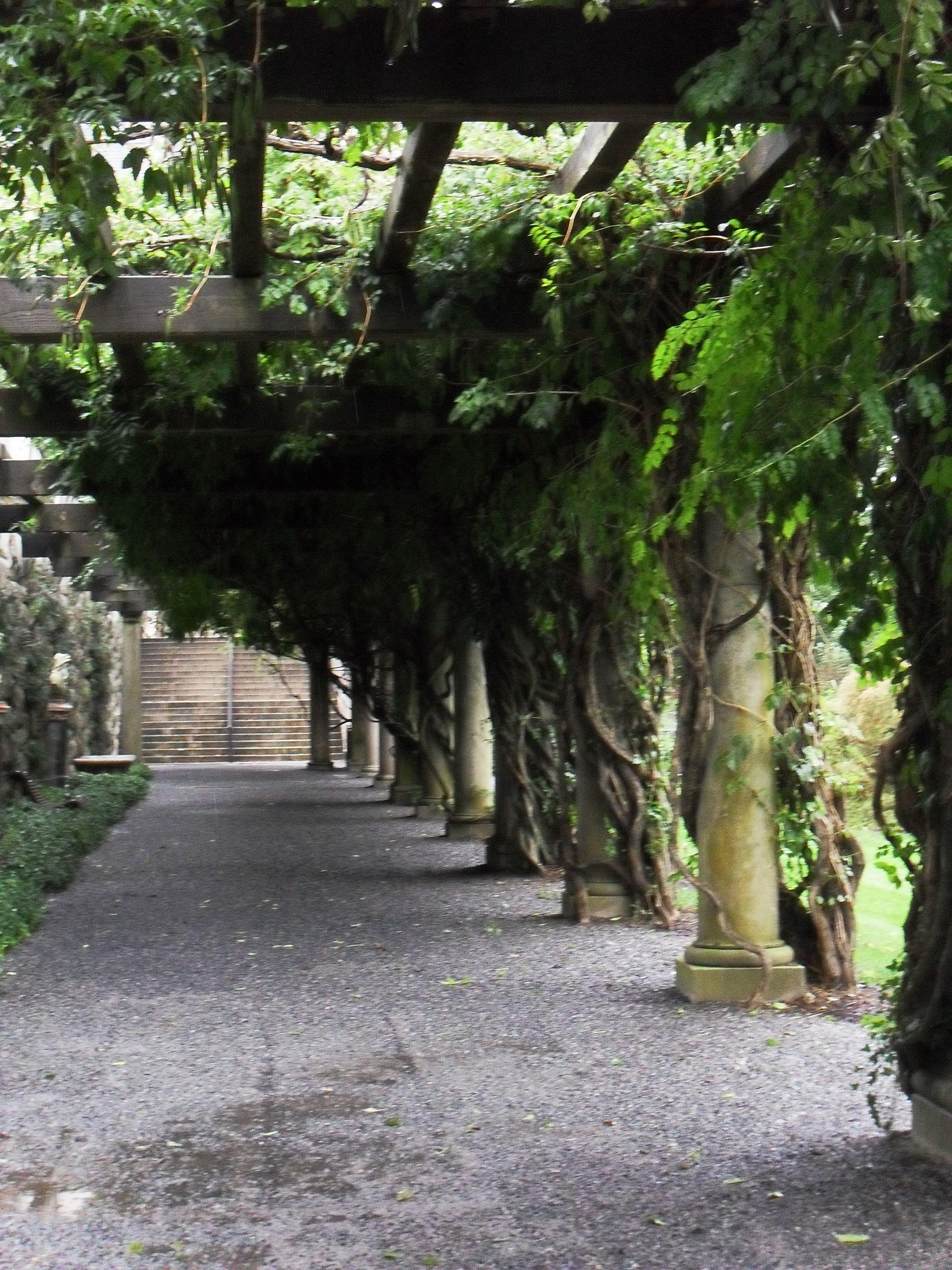 Massive Wisteria Vines Are Trellised Biltmore House