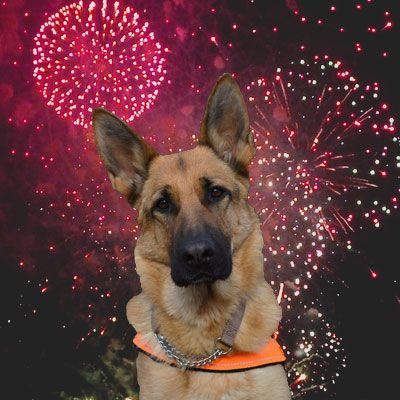 ¿Tiene tu #perro miedo a los fuegos artificiales? Os damos unos consejos para saber qué hacer ante esta situación.