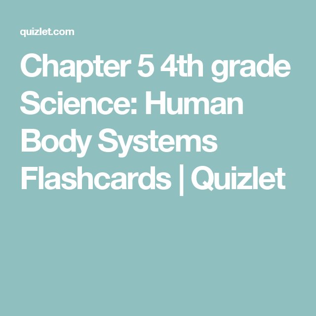 Chapter 5 4th grade Science: Human Body Systems Flashcards