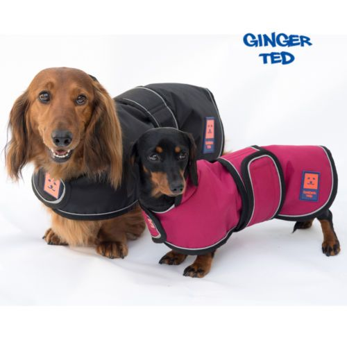 Details About Ginger Ted Uk Shower Dachshund Waterproof Dog Coat