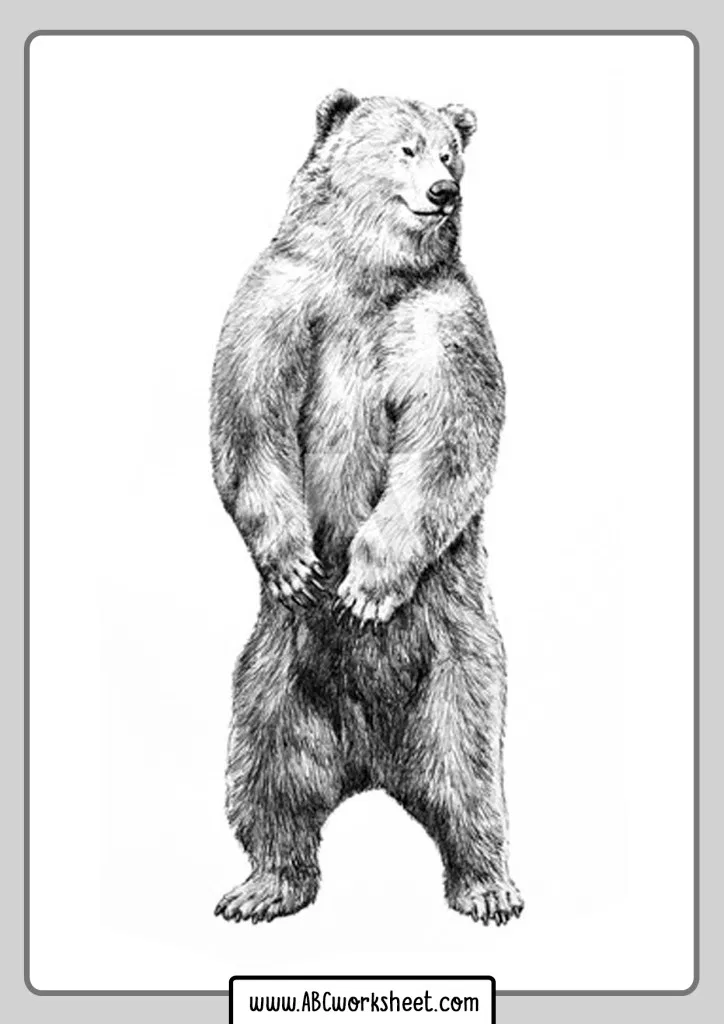 Grizzly Bear Coloring Pages In 2020 Bear Coloring Pages Grizzly Bear Coloring Pages