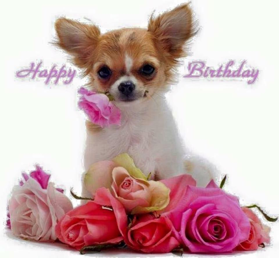 Pin by lenka awad on happy birthday quotes pinterest happy happy birthday greetings happy birthday quotes birthday board happy birthdays doggies animal birthday wishes greetings little dogs birthday wishes kristyandbryce Choice Image