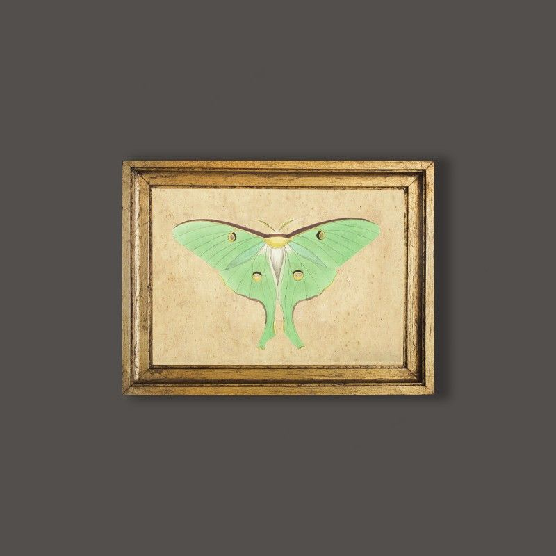 Cuadro con marco de madera dorado a mano, con motivo de mariposa ...