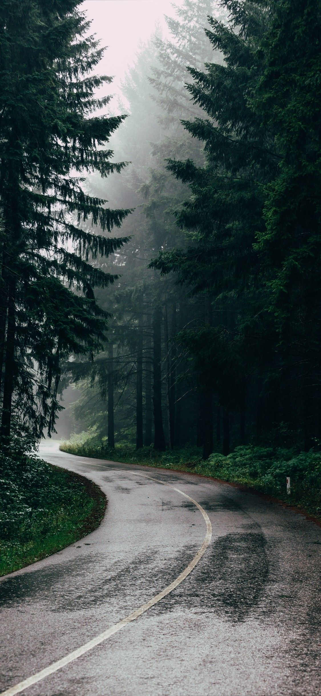 Iphone Wallpaper Nature 43 In 2020 Forest Photography Nature Photography Photography Wallpaper