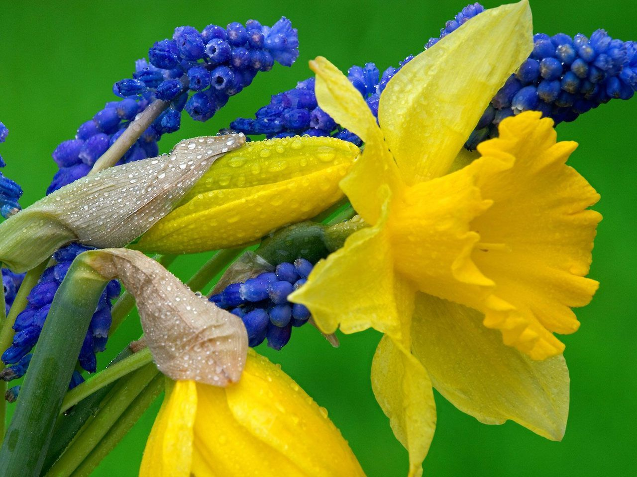 The Narcissus Aka The Daffodil Is A Poisonous Spring Flowering Plant That Can Induce Vomiting Fatal Convulsions And Cont Planting Bulbs Fall Plants Daffodils