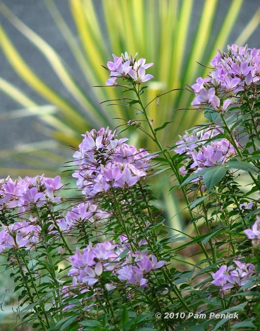 Great Site For Deer Resistant Plants For Central Tx The Author Gives Great Suggestions For M Deer Resistant Plants Deer Resistant Garden Deer Resistant Flowers