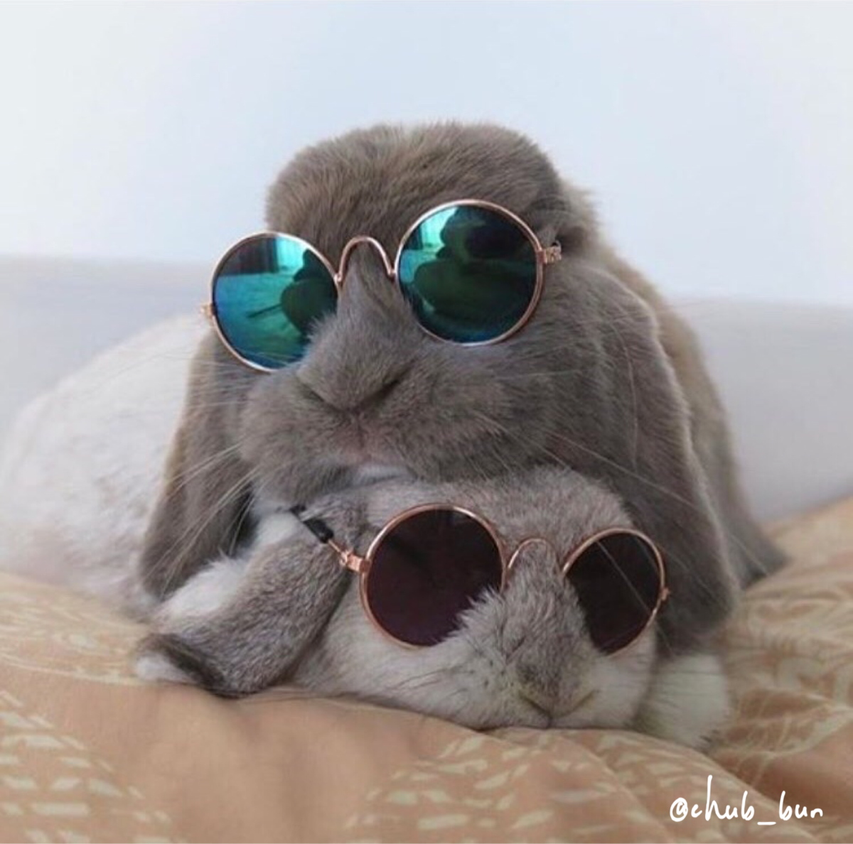 Rockstar Sunglasses for Rabbits & Bunnies
