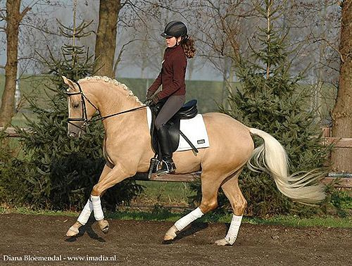 You Don T See Many Palomino Dressage Horses And Guess
