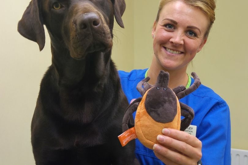 A family-run veterinary group with practices in Widnes, West Derby, Gateacre and St Helens has revealed a staggering increase in the number of pets being treated for ticks. White Cross Vets veterinary nurse Hayley Thompson checks pet pooch Paddy for ticks.