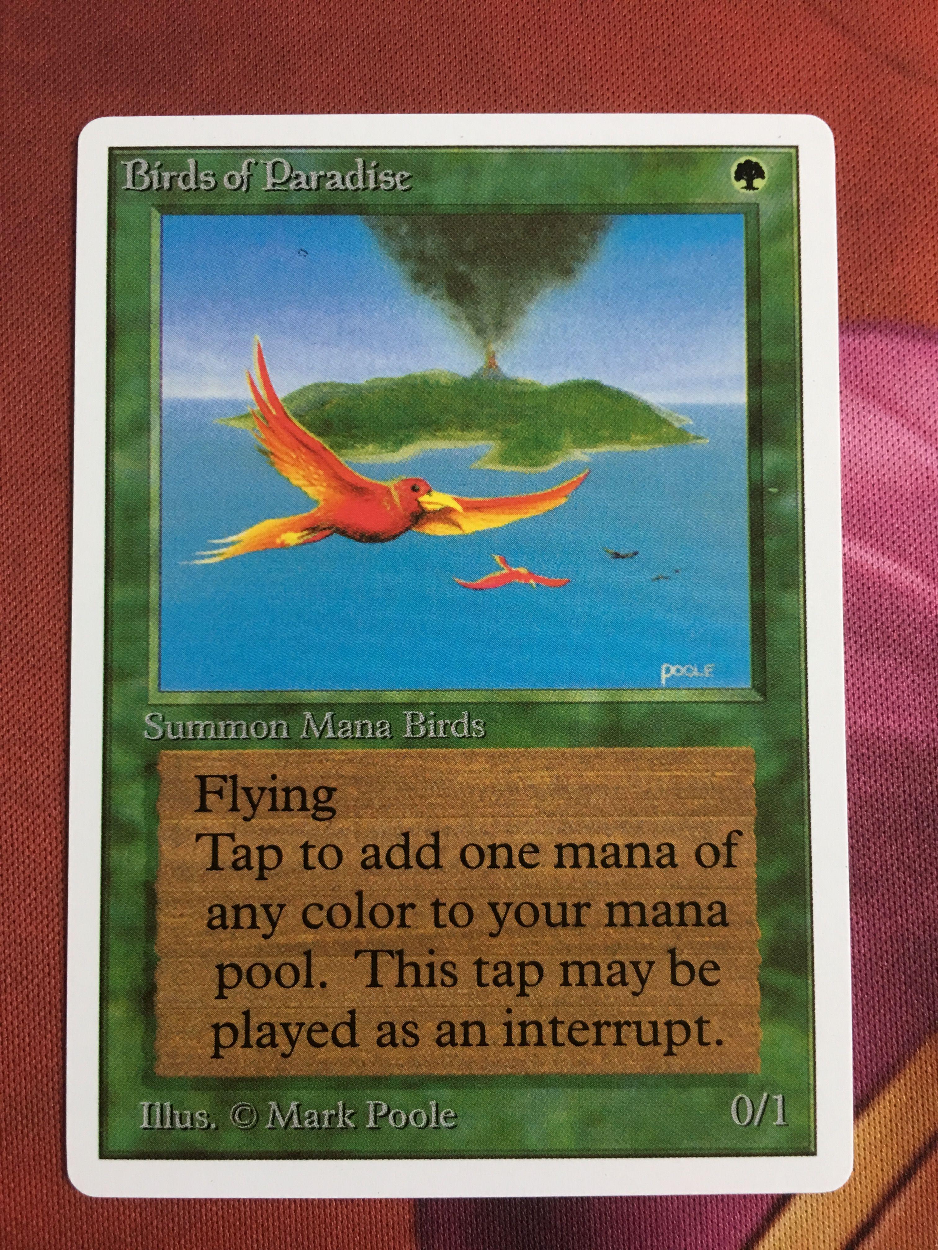 Birds of paradise unlimited birds of paradise magic