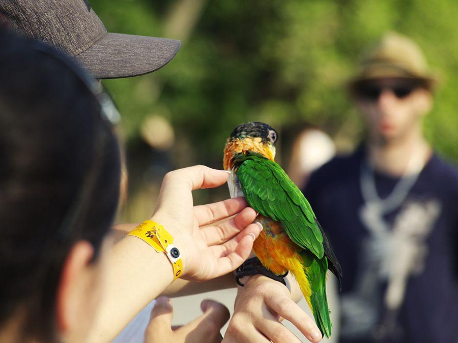 #summer #bird #montreal