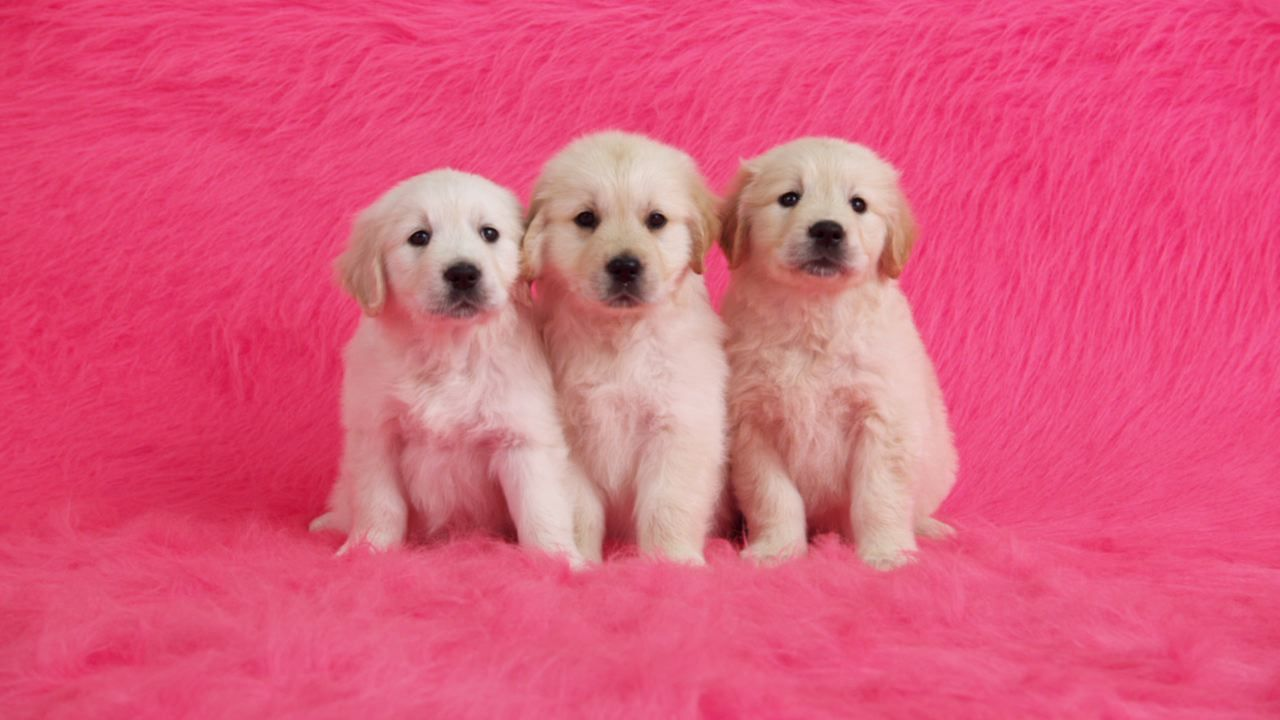 Puppies Three Cute Puppies Puppy Dog Pictures Cute Dogs Dogs
