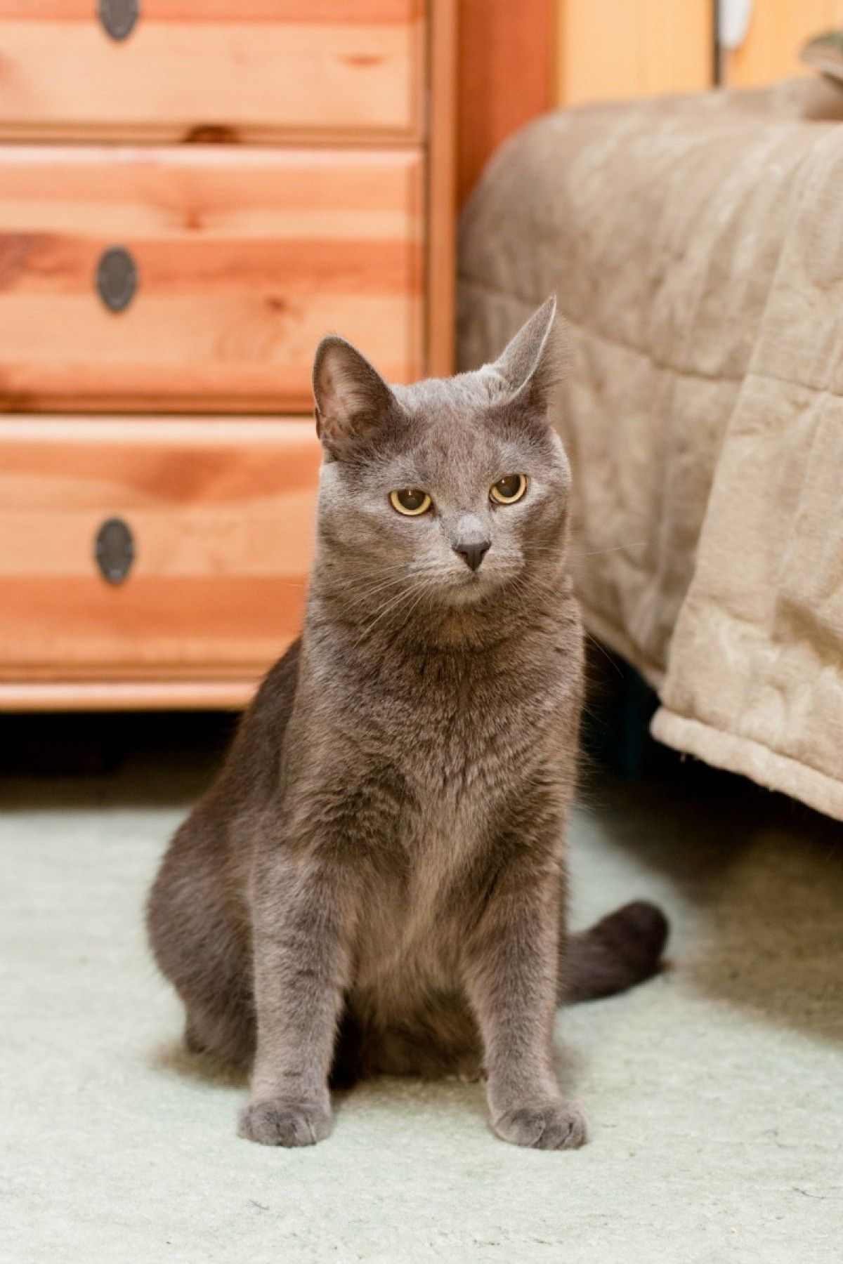 Awesome how to remove cat urine from carpet padding and