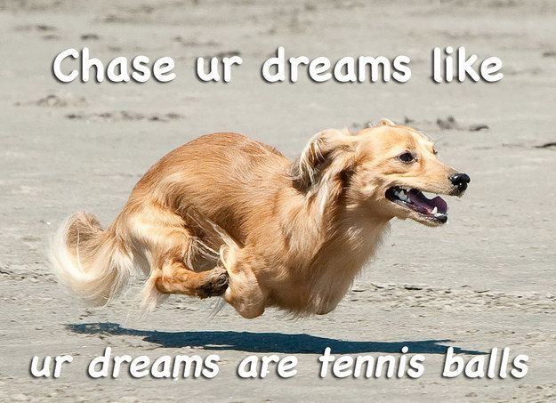 13 Motivational Dog Posters That Will Really Make You Reflect On - pet poster