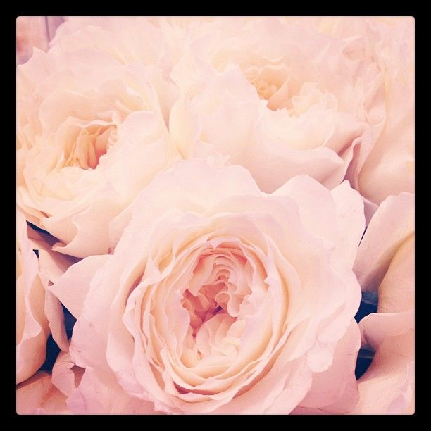 Garden Roses. Smells even better than it looks..