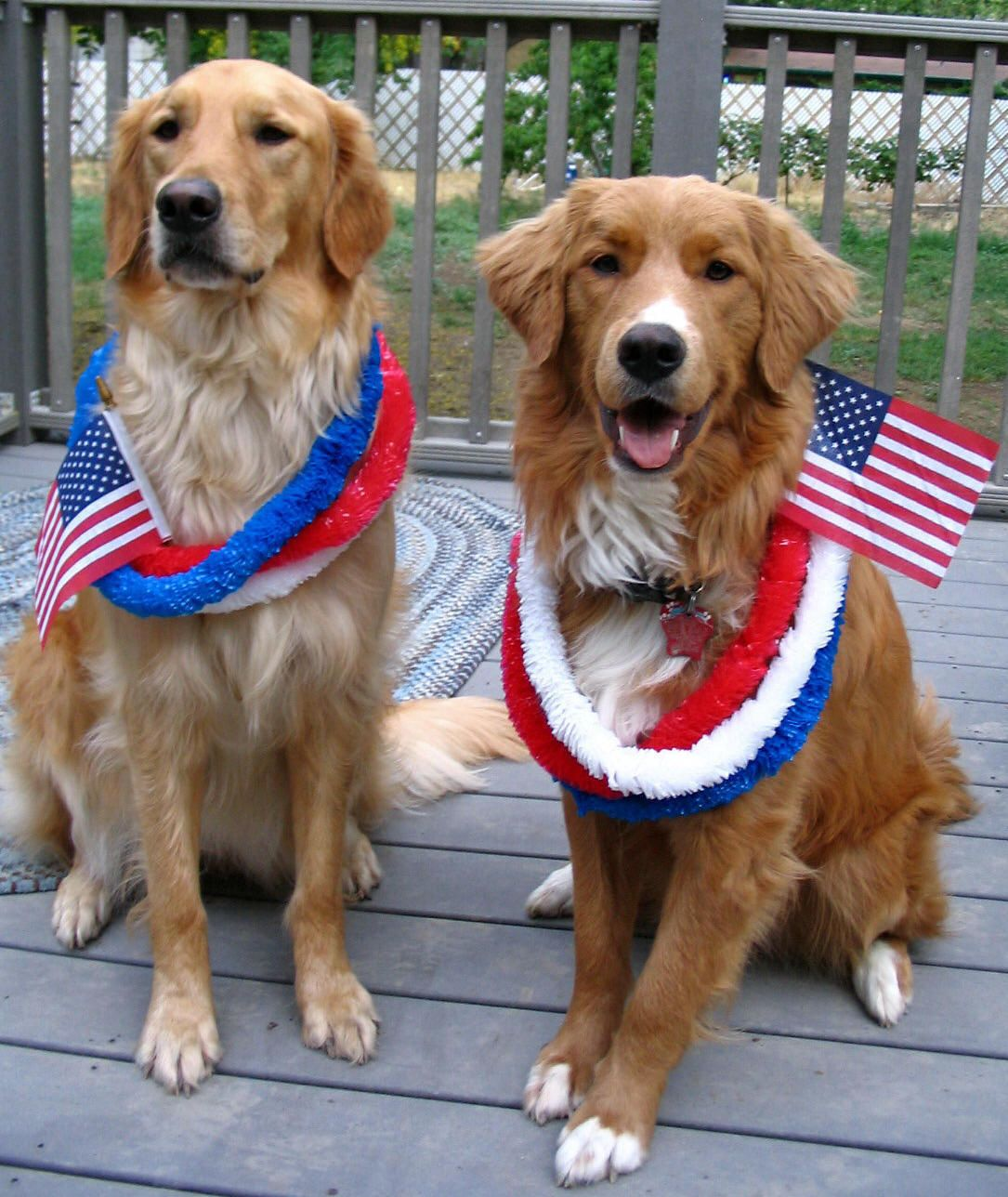 Northern California Rv Camping 49er Village Rv Resort Patriotic Pets Pet Holiday Patriotic Pooch