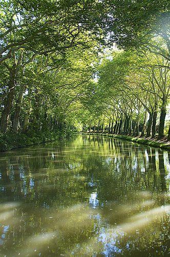 Le Canal du Midi et ses allées de platanes , Aude, Languedoc-Roussillon, France
