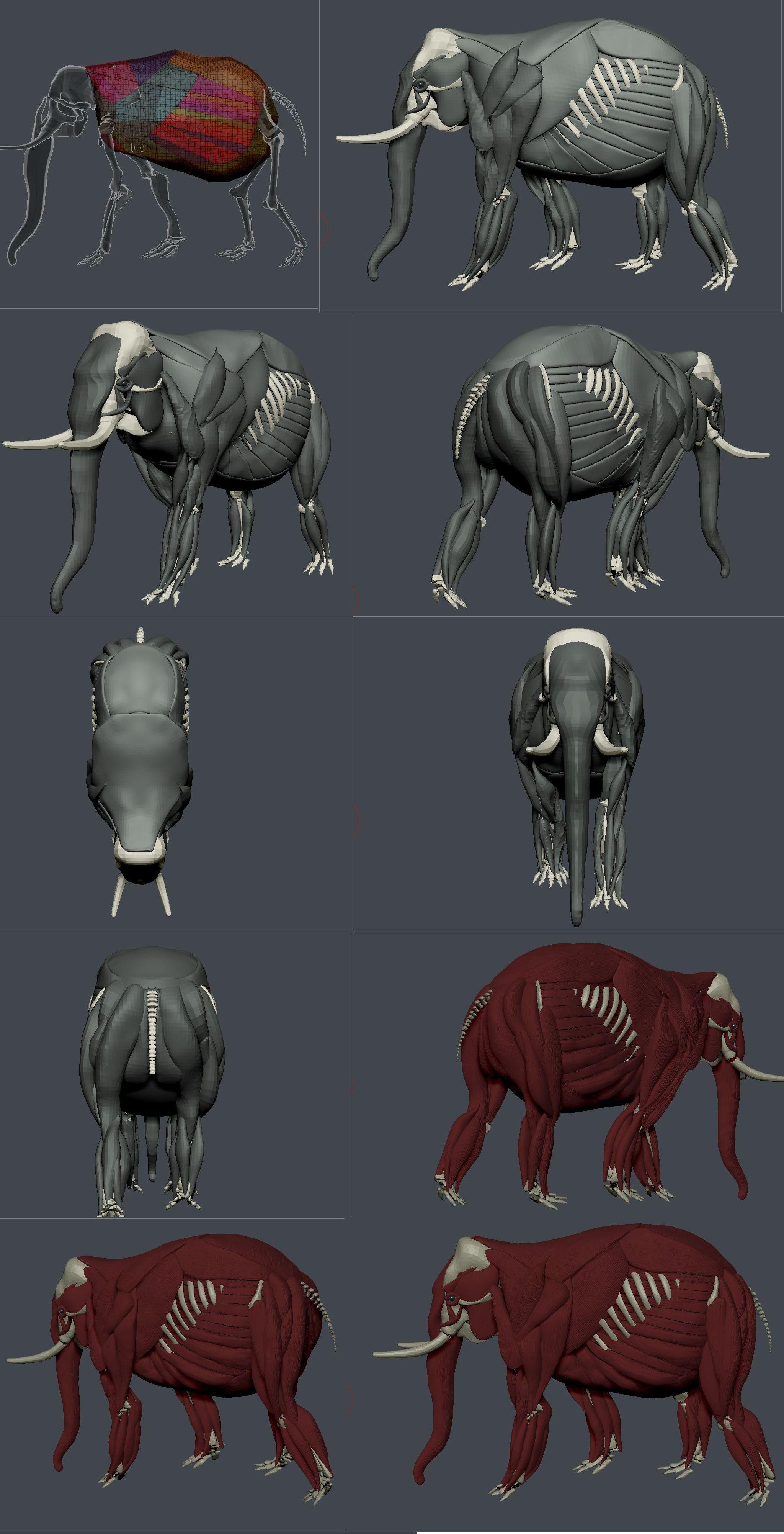 elephant | 3d char ref | Pinterest