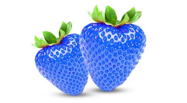 Vypestujte si modré jahody zo semiačka na záhrade alebo balkóne