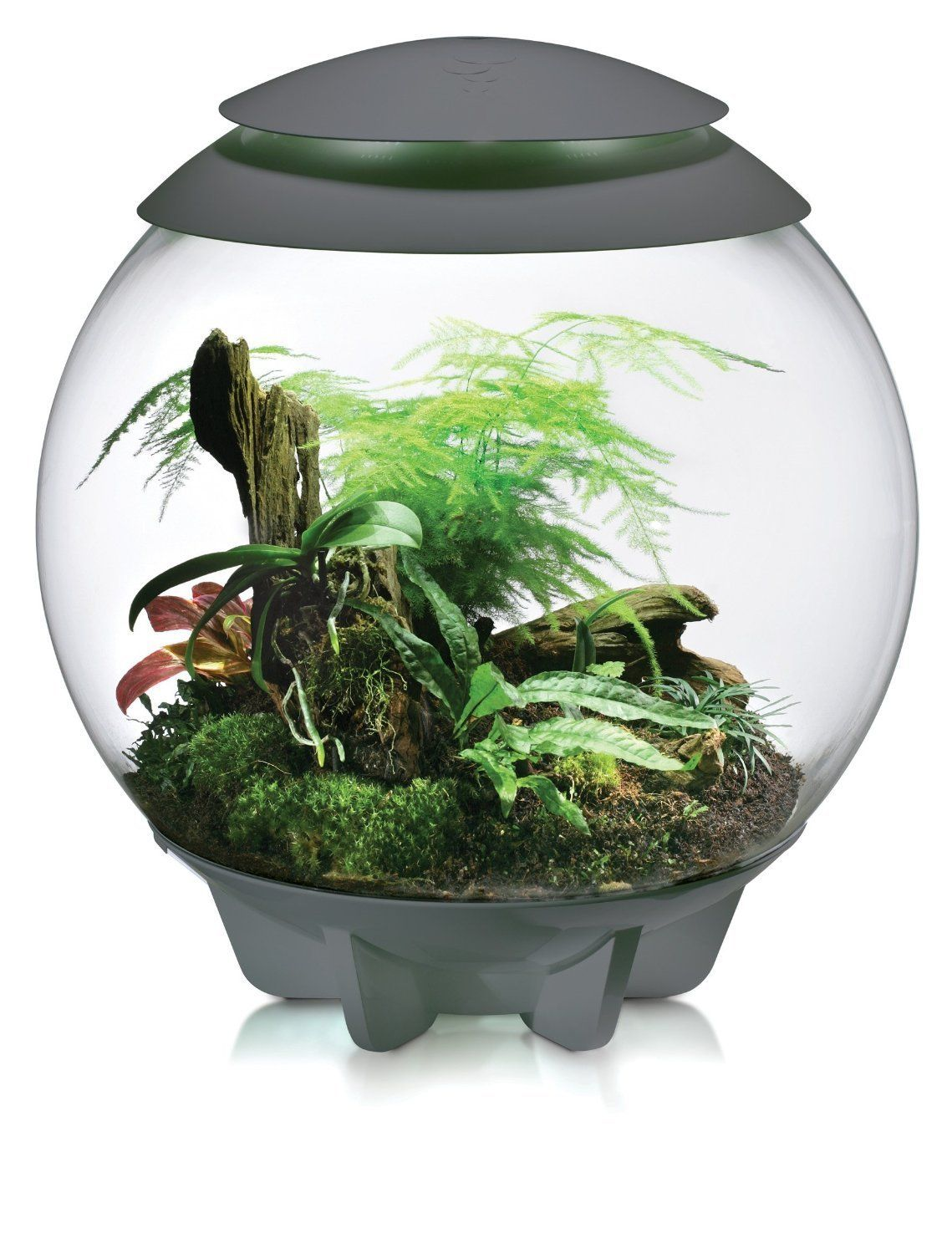 biOrbAIR Terrariums Create SmallScale Bio Domes Biorb