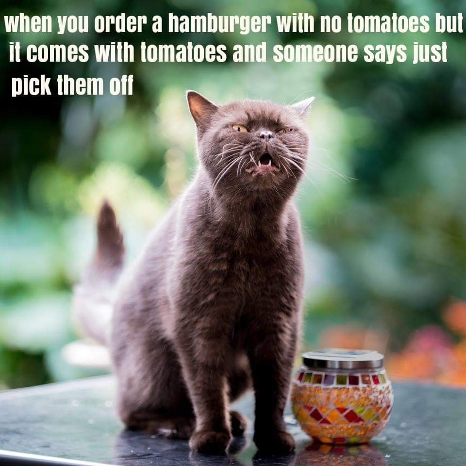 Pin By Cindy Bentley On Amazing Purrs Cat Sneezing Funny Cat Images Funny Cute Cats