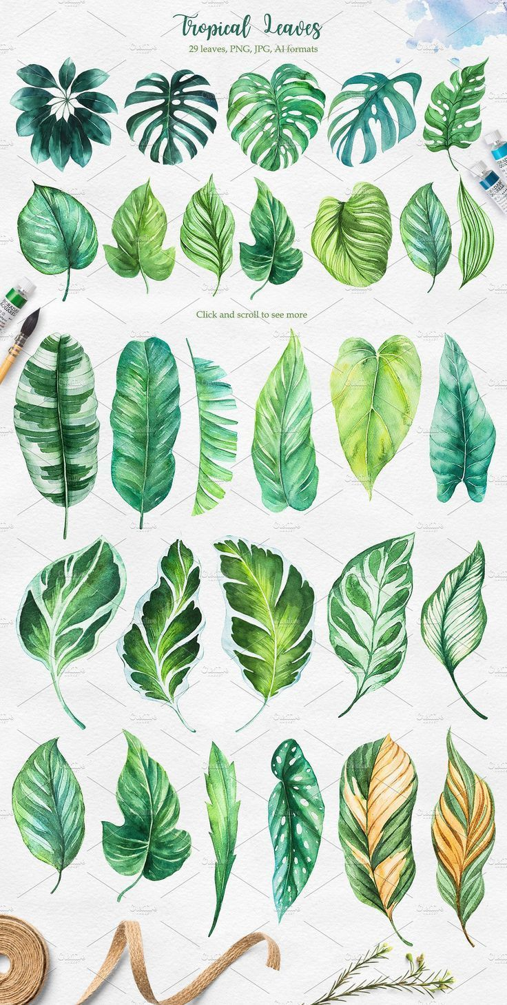 Photo of Tropical. Watercolor illustrations. # Boutiques # cafes # smell # tropics #illustration …
