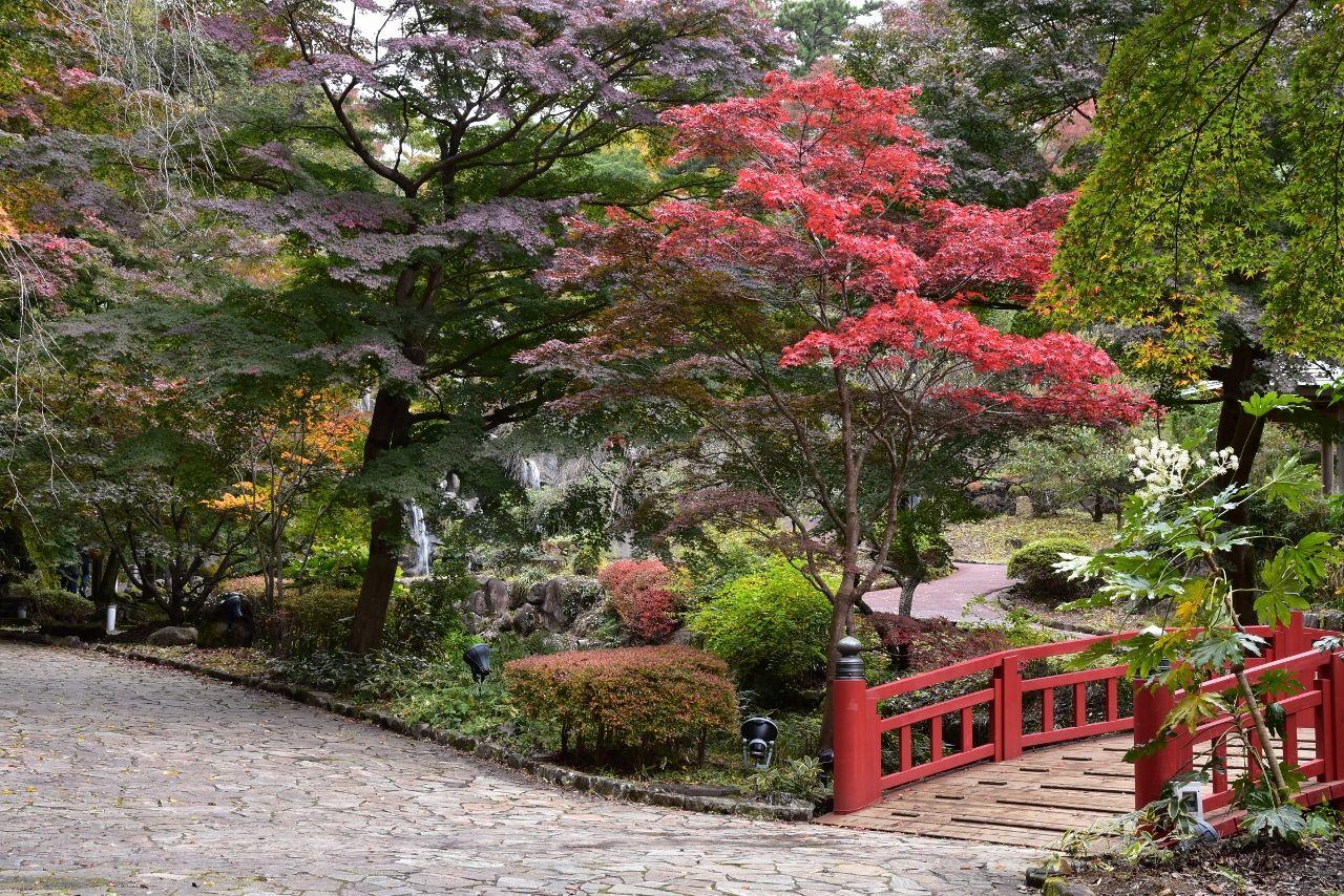 熱海梅園 2016.11 | Японские сады / Japanese gardens | Pinterest