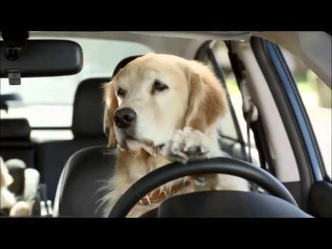 subaru dog commercial - funny commercials! - youtube | humor