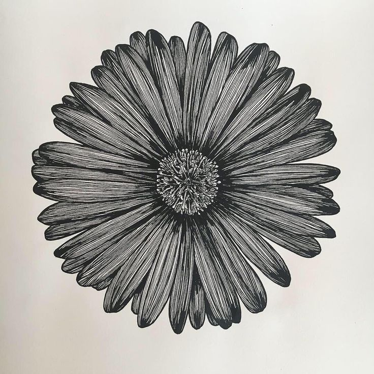 Follow for much more flowers! Aster Flower Drawing