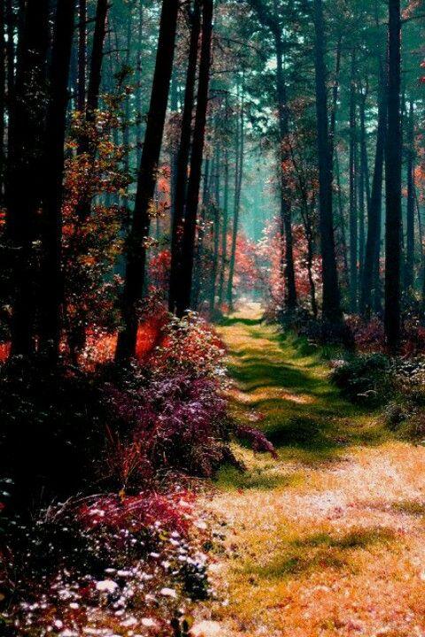 Magical Forest, Poland