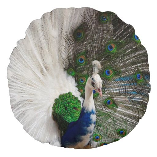 White Blue Peacock Round Pillow Zazzle Com In 2021 Rare Albino Animals Albino Peacock Rare Animals