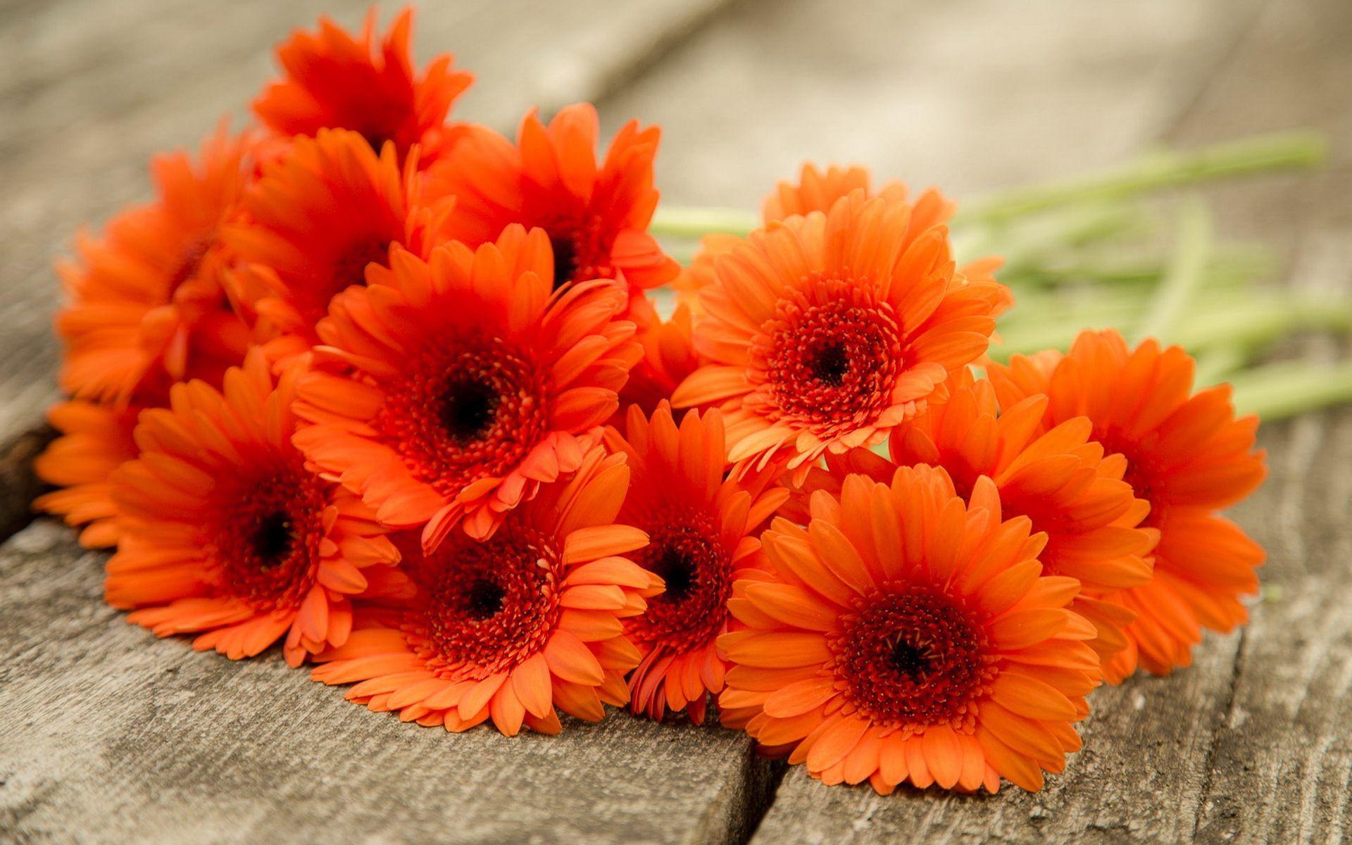 Gerbera Daisies Wallpaper Hd For Desktop Of Orange Flowers Daisy Wallpaper Gerbera Flower Gerbera Daisy