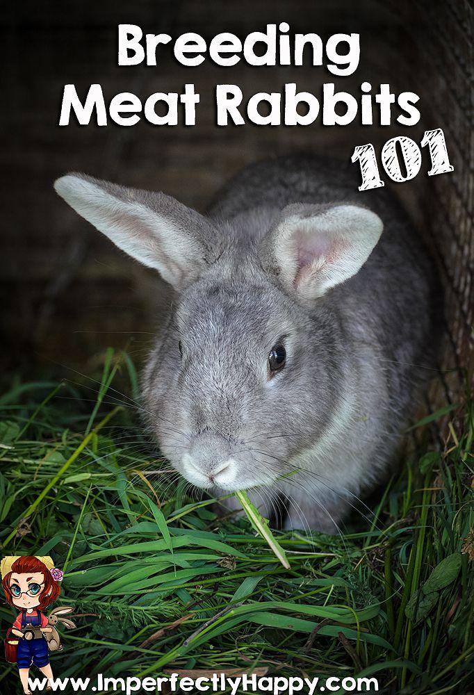 Breeding Meat Rabbits 101   Meat rabbits, Meat rabbits ...