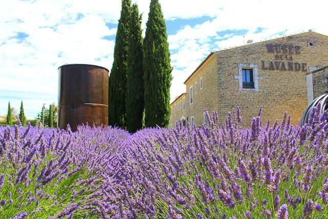 Purple summer in Provence