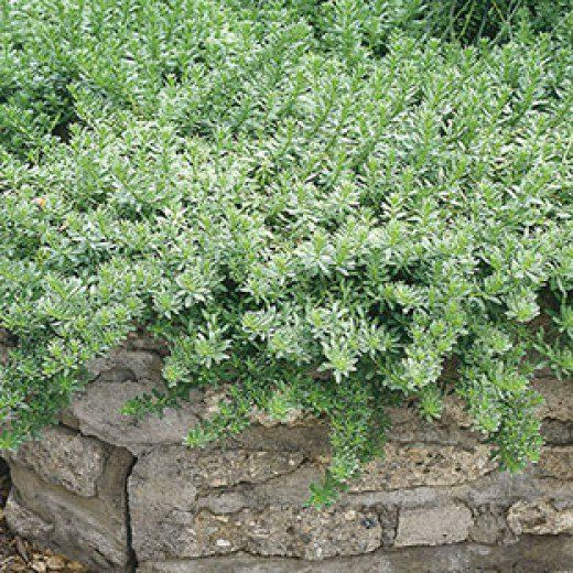 Best Plants And Erosion Controls For Slopes And Hillsides Steep