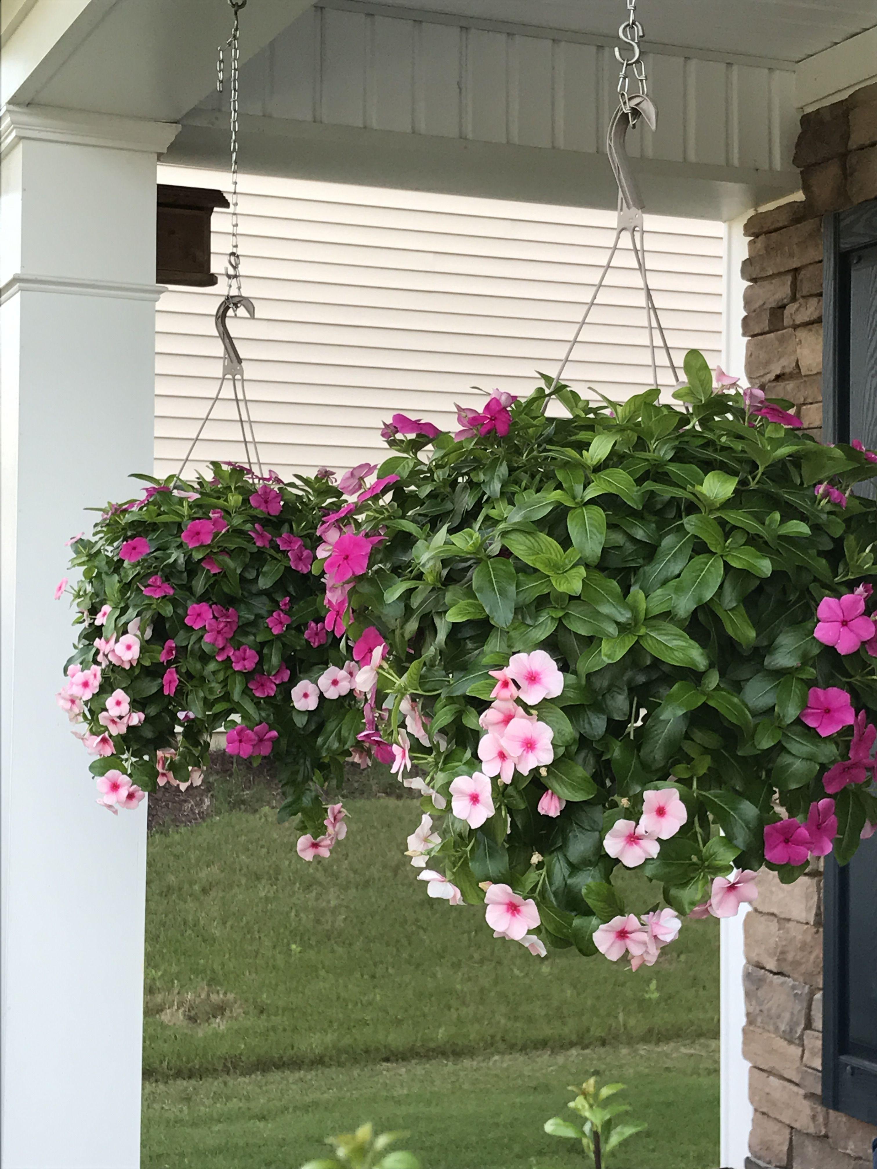 Trailing Vinca From Lowes Garden Wall Flower Garden Sun Plants