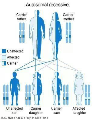 Alpha 1 Genetics This Is Exactly How It Broke Down In My Family School Von Willebrand Disease Genetics Teaching Biology