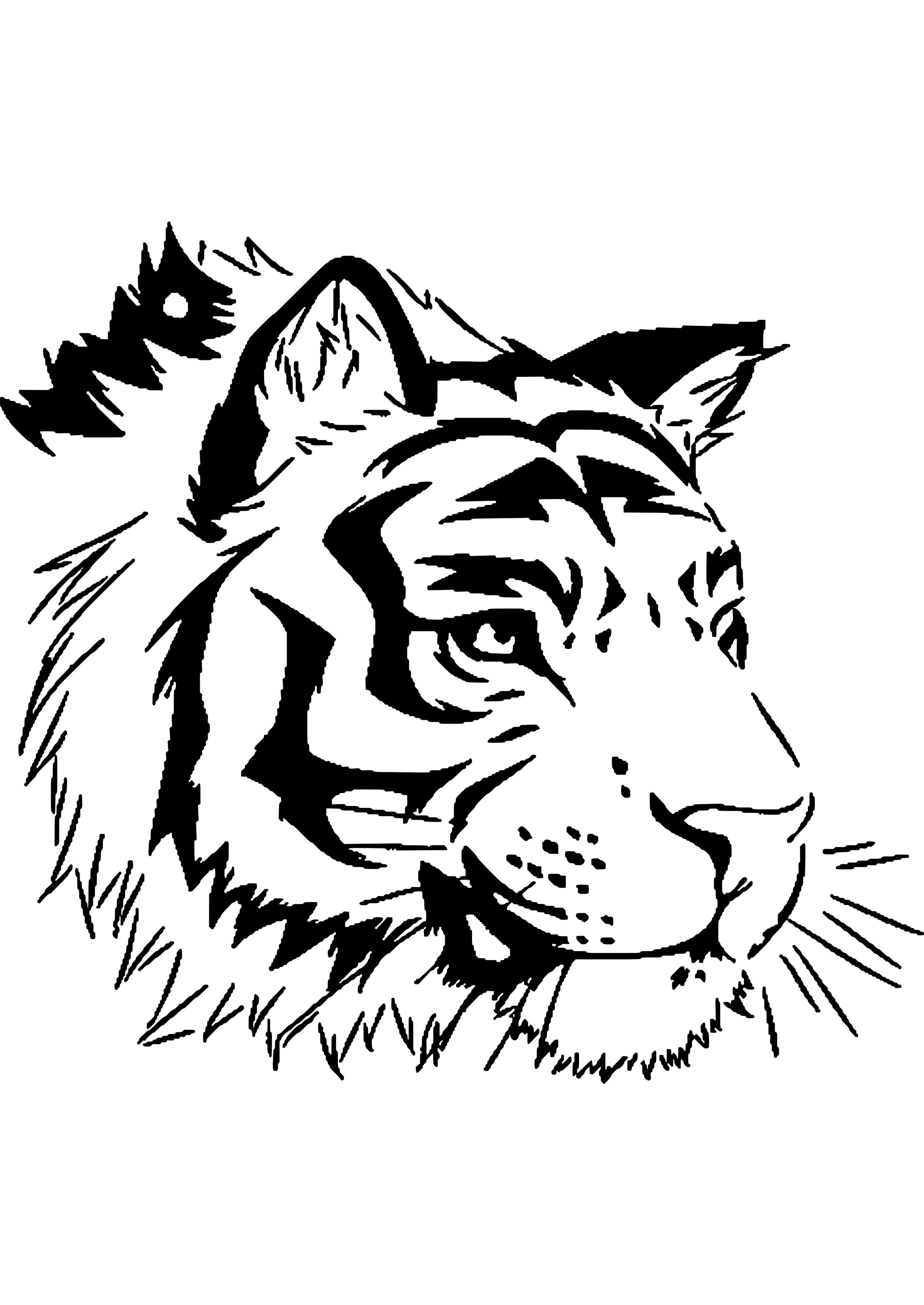 Coloriage Tigre.Dessins A Colorier Coloriage Tigre A Imprimer Frise Chambre