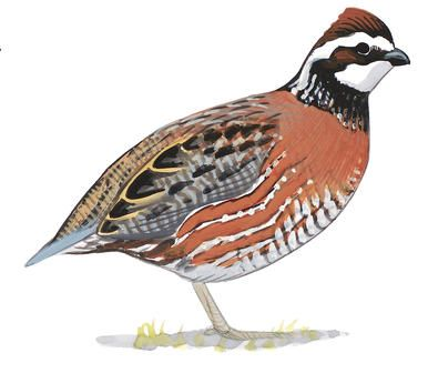 Birds of North America Field Guide | Bird guides, Great ...