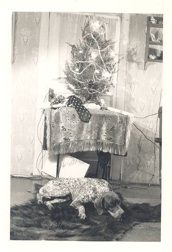 German Shorthaired Pointer with Christmas tree | Flickr - Photo Sharing!