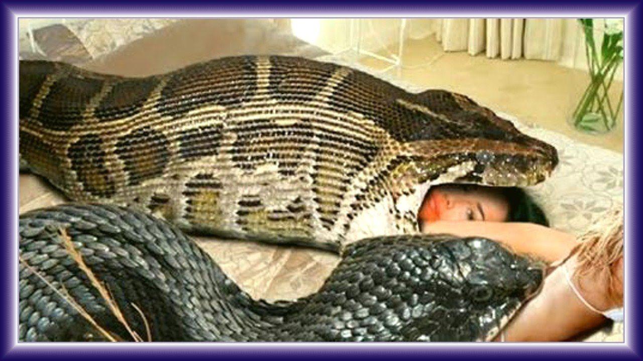 Pin by maria gomez on Anaconda Attacks Human Caught on ...