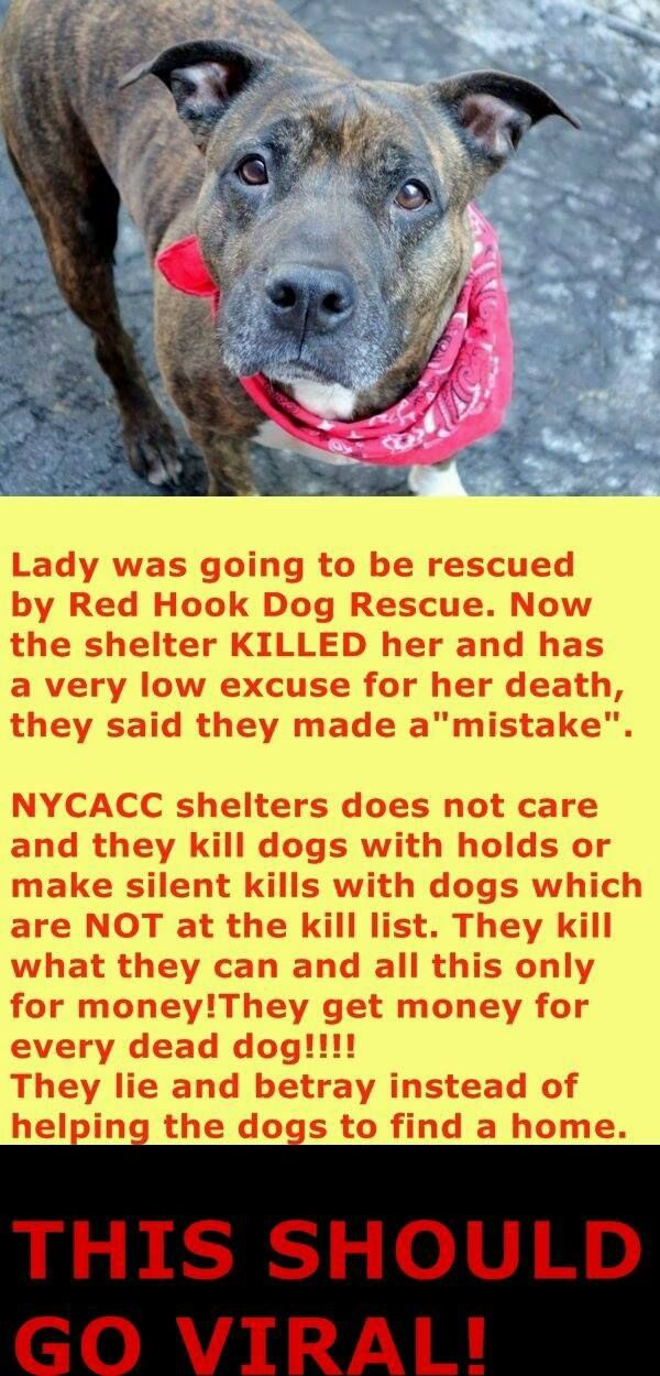 LADY HAD A RESCUE HOLD BUT NYC ACC KILLED HER ANYWAYS