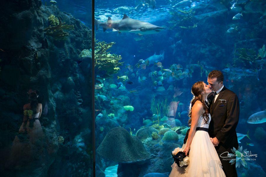 Florida aquarium weddings