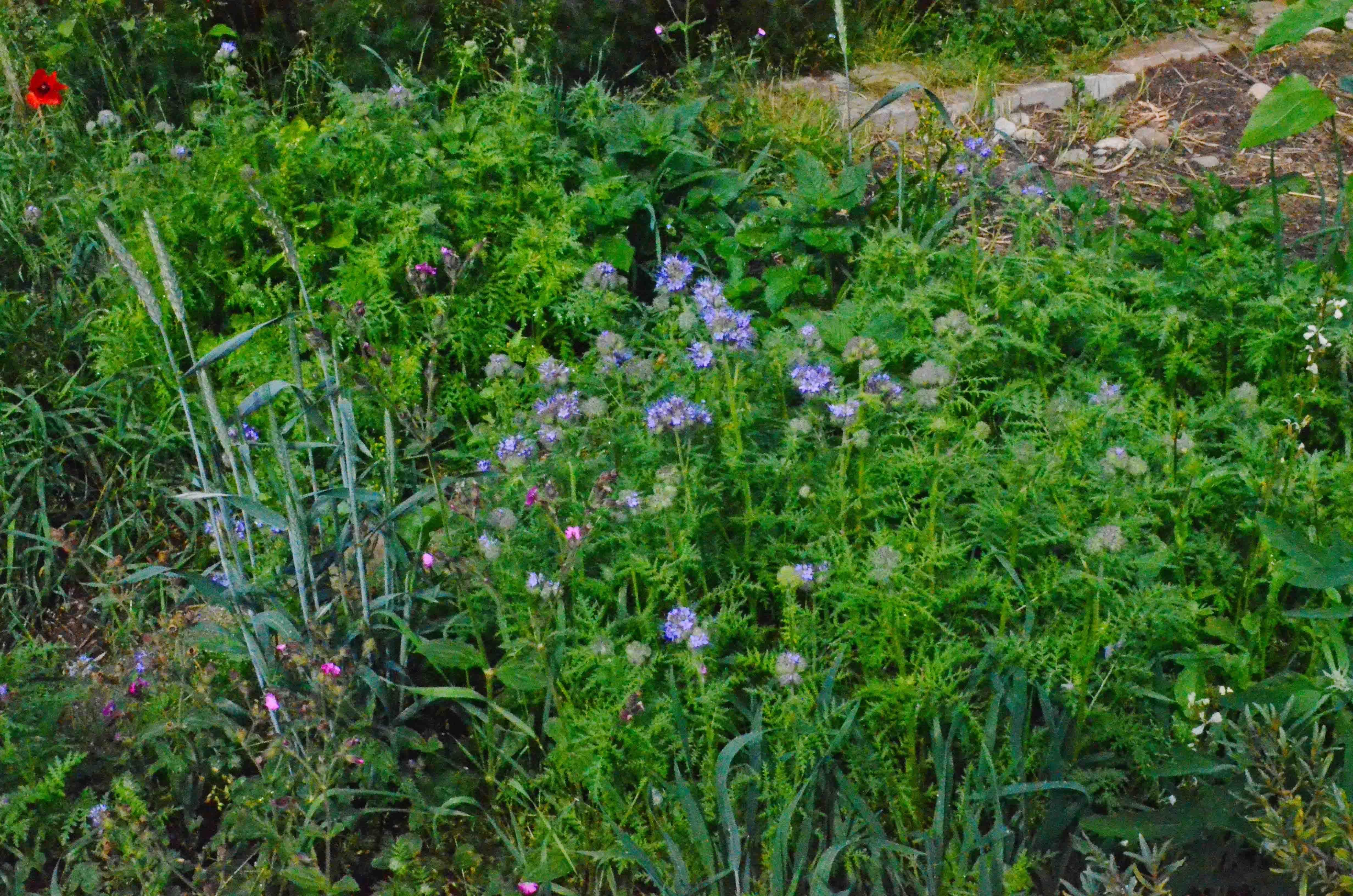 Pflanzen Dungen Mit Biologischen Hilfsmitteln Haus Und Beet Pflanzen Garten Hilfsmittel