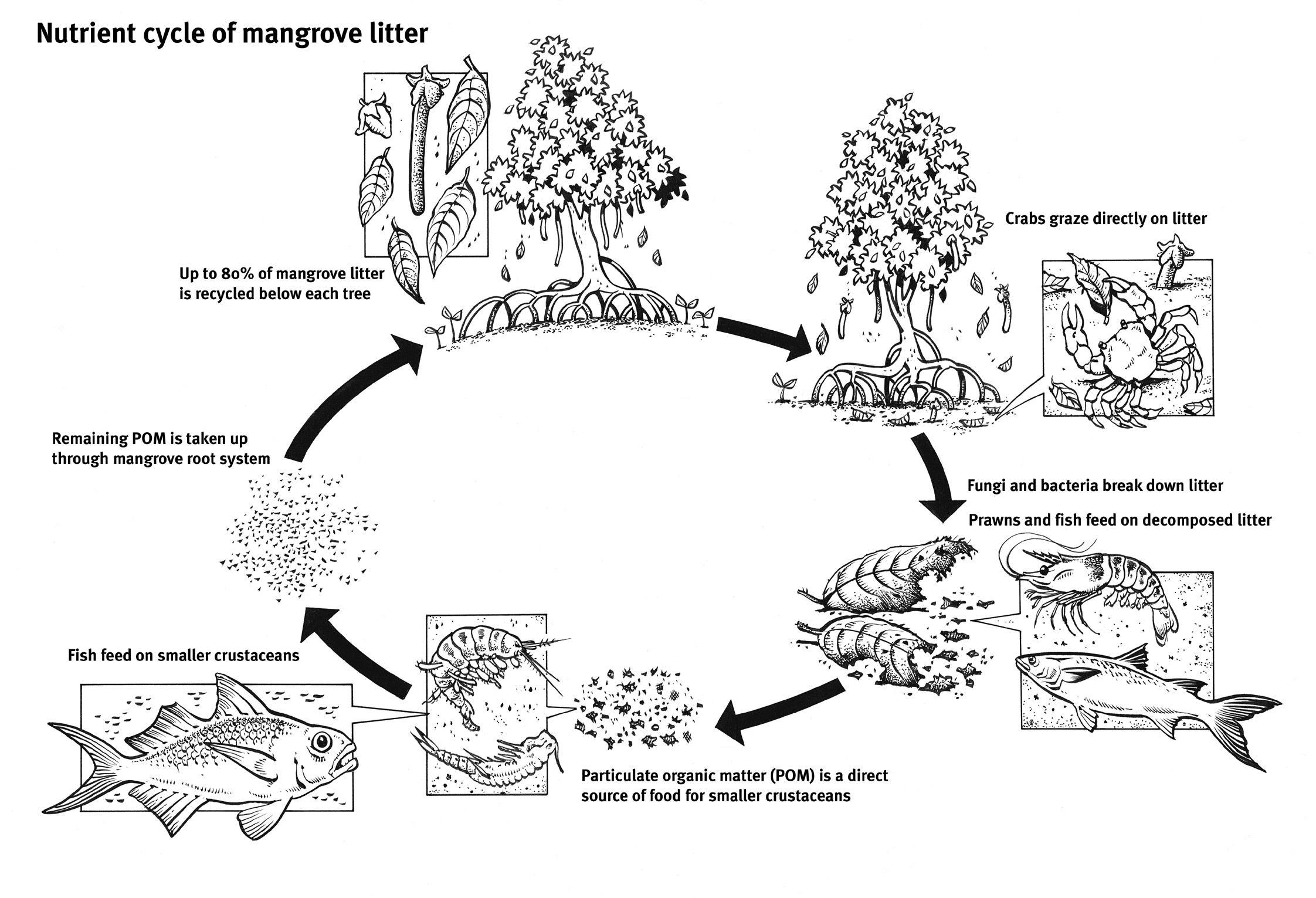 Image Result For Support Mangroves Design