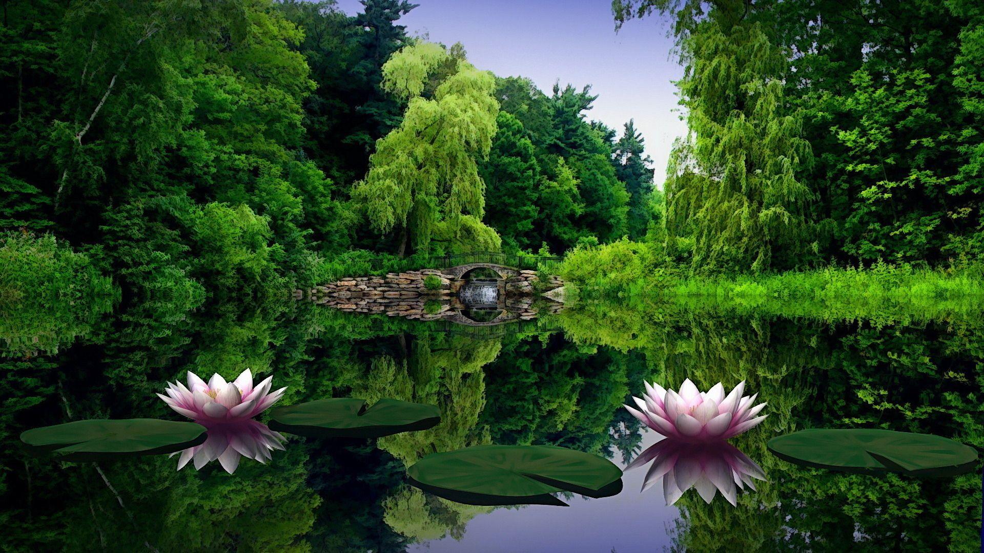 Amazing Lotus Lake Wallpaper Nature Desktop Green Nature Green Nature Wallpaper