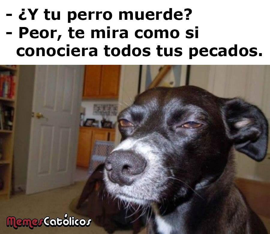 Los 25 Mejores Memes Catolicos De Este 2017 Memes Catolicos Memes Catolicos Memes Divertidos Chistes De Perros