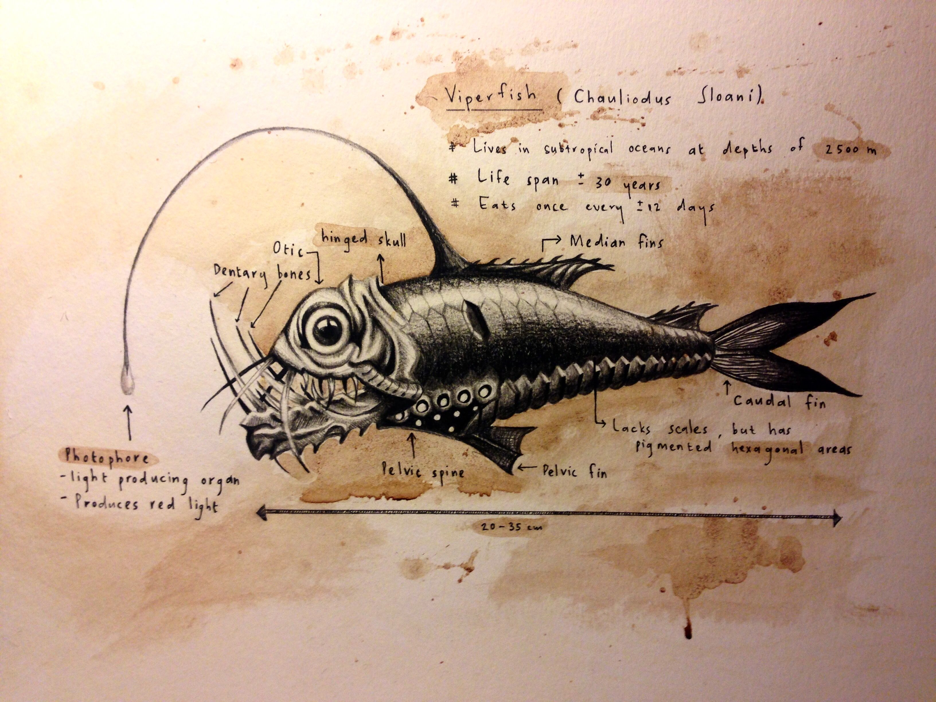 Viper fish. Charcoal and hot chocolate on paper by Lili Piek