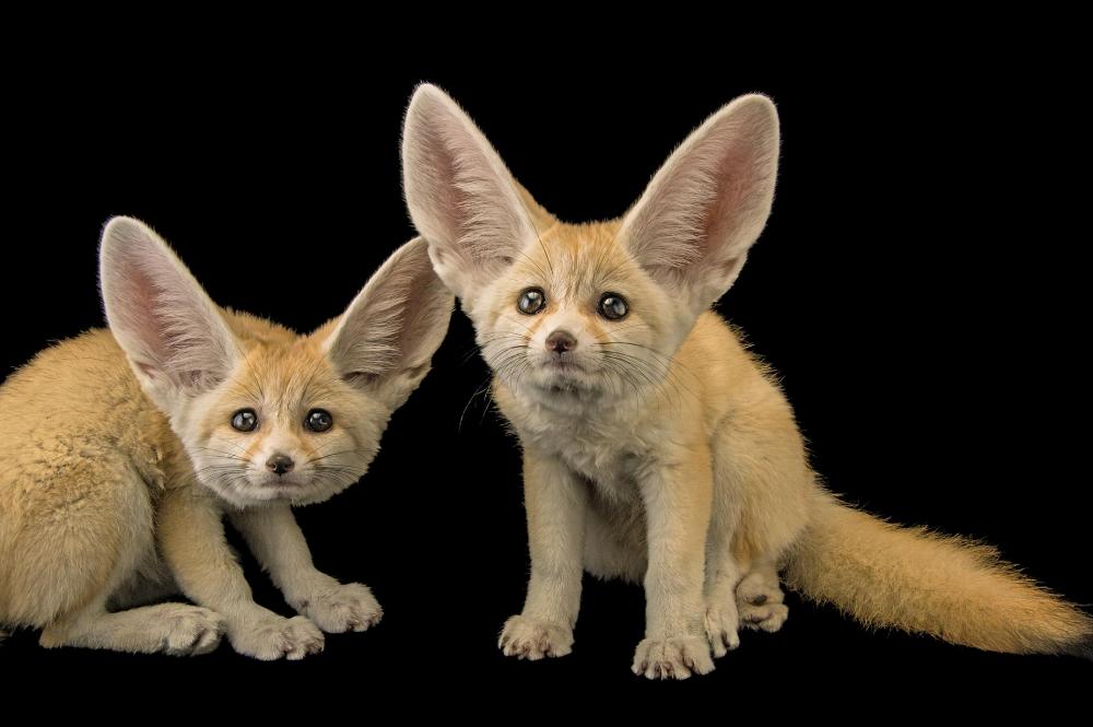 Inside Joel Sartore S Photo Ark For Animals Endangered Animals Most Endangered Animals Rare Animals